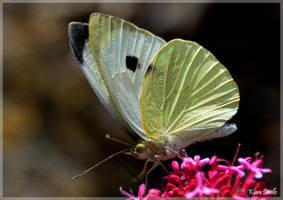 Petit papillon by KlaraDrielle