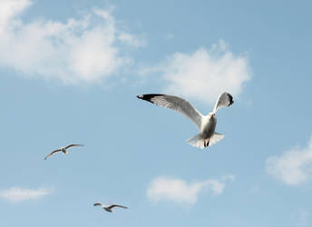 Gulls by StefanoCatalano