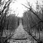 distant voices by kuru93