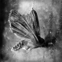 moth suspended by kuru93