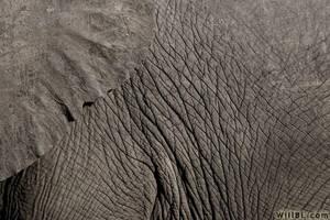 Elephant Skin by willbl