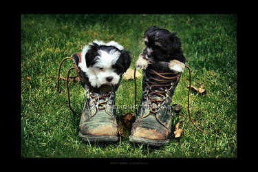 :: Fluffy boots :: by Liek