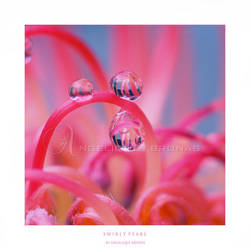 :: Swirly pearl :: by Liek