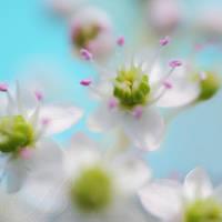 :: Little blue garden :: by Liek