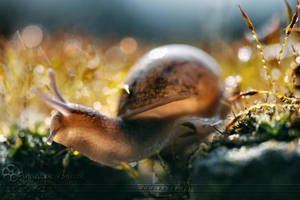 :: Lovely little world :: by Liek
