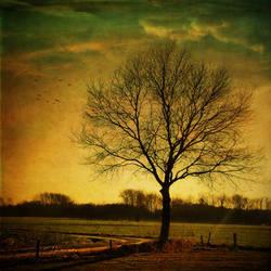 :: Tree :: by Liek