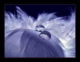 :: Tears :: by Liek