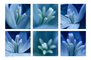 :: Bluequet :: by Liek