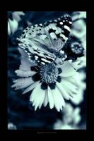 :: Butterfly :: by Liek