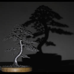 #bonsai #tree #shadow by kaitrees