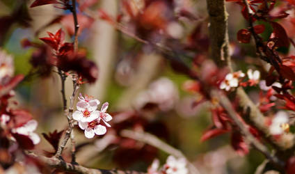 Praying for spring by estuoh