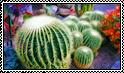 Barrel Cacti Stamp by jaynedarcy