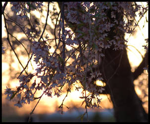 let's wait for sundown by Kaleena127