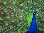 Bronx Zoo 6 by Evilchild715
