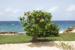 curacao55 by Fune-Stock