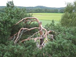 fune-stock_cut_tree1 by Fune-Stock