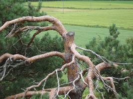 fune-stock_cut_tree2 by Fune-Stock