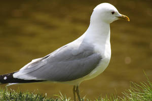 seabird by kay944