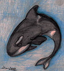 Orca by valdrianth