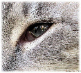 In Her Eyes by SteveMcClelland