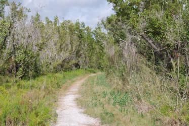 Surprise Stock: Everglades Trail by SenshiStock