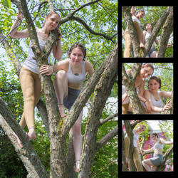 Tree Pair Pack - Free Preview! by SenshiStock