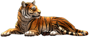 Tiger by CantaloupeFish