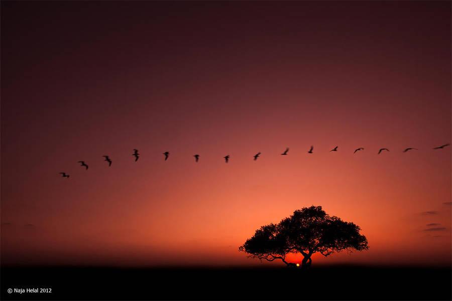 Safari by eyesweb1