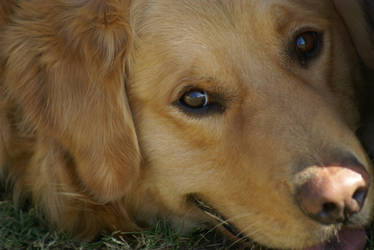 Puppy Eyes by lovlyninja39