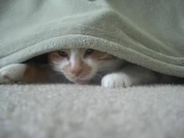 peek-a-boo by ajuse