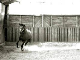 horse by freeBrainwash
