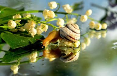 Lily and snail by ViktoriyaDr