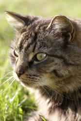 Kitty Katt by BrainGhost
