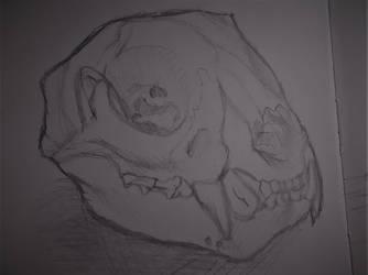 Skull sketch by donut1280