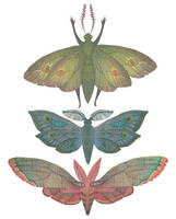 Saturn Moths by V-L-A-D-I-M-I-R