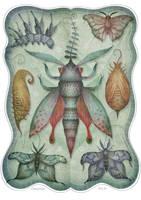 Entomology Tab. II by V-L-A-D-I-M-I-R