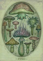 Fungi III by V-L-A-D-I-M-I-R