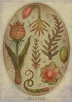 Plantae IV by V-L-A-D-I-M-I-R