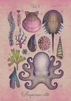 Aequoreus vita V / Marine life V by V-L-A-D-I-M-I-R