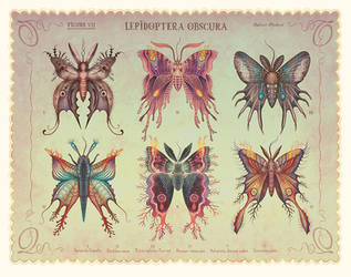 Lepidoptera obscura by V-L-A-D-I-M-I-R