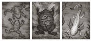 Mustache Frog, Surinam Toad and the Axolotl by V-L-A-D-I-M-I-R