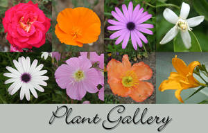 Plant Gallery by Sirevil