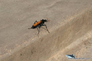 Huge Wasp by Sirevil
