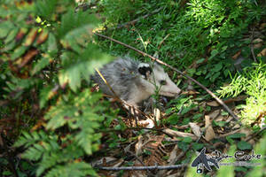 Hiding in the Brush by Sirevil
