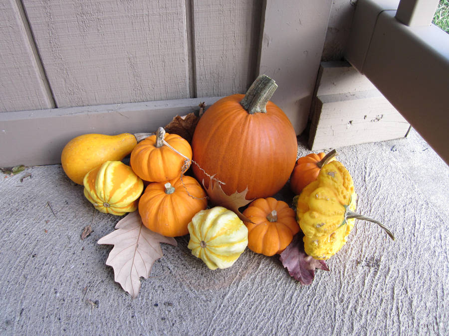 Teeny Pumpkins by MillyT