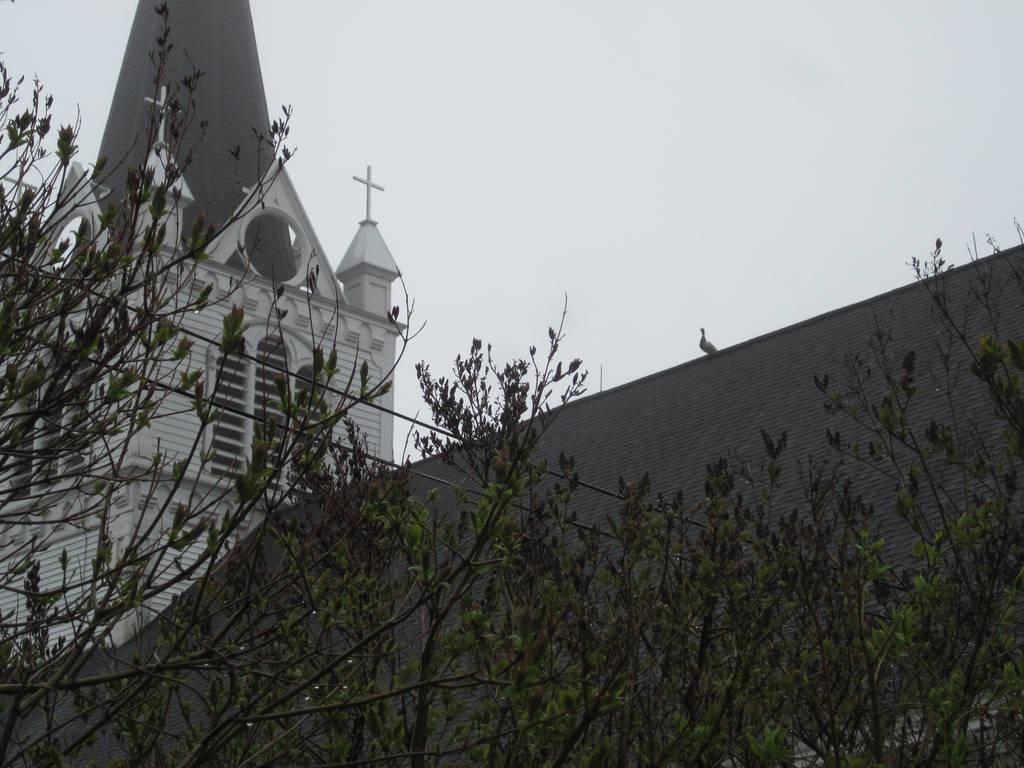 Mallard on St. Anne's by MillyT