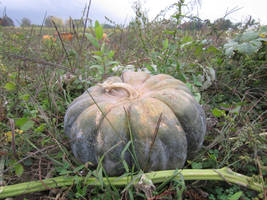 Green Pumpkin by MillyT