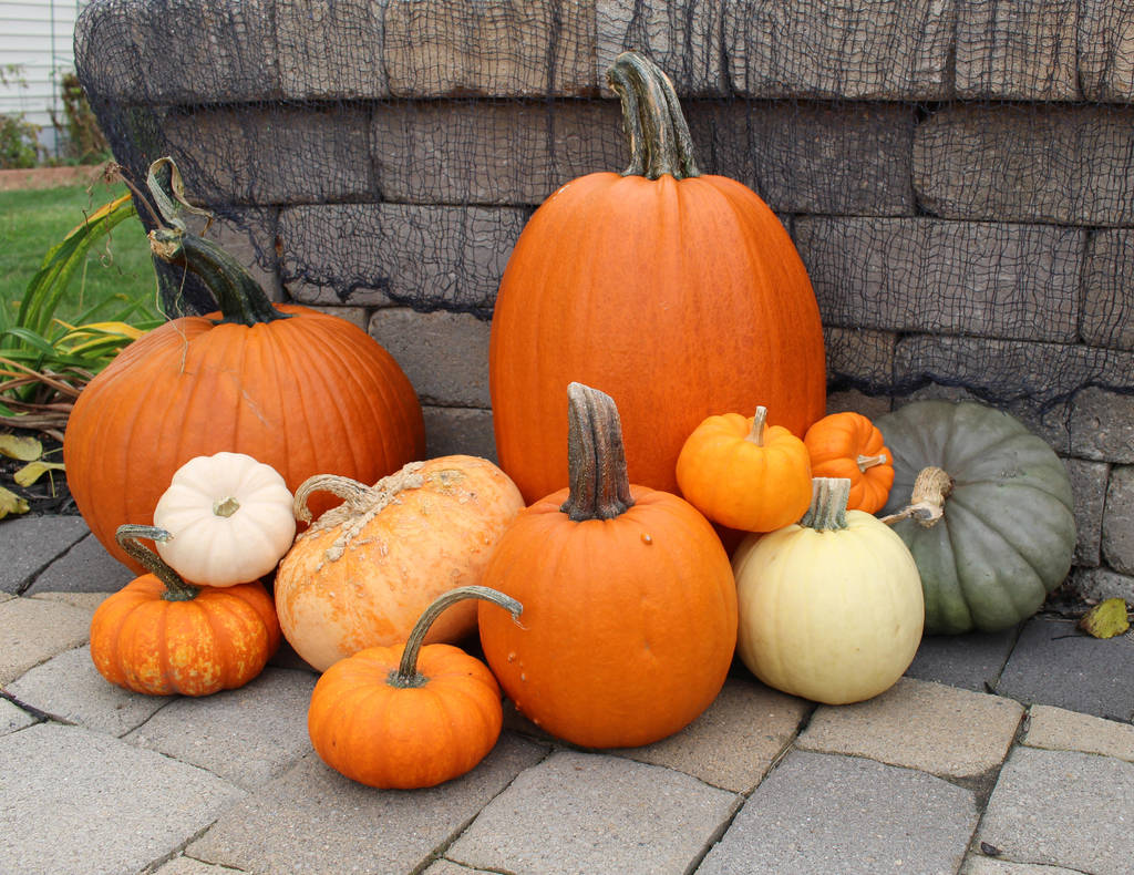 Pumpkins and Squash by MillyT