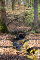 Spring Stream by MillyT
