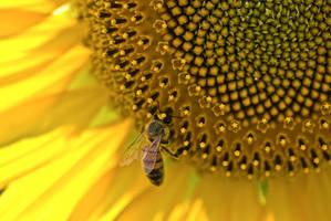 Bzzzz bee by FinTaRa